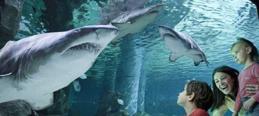 Ikke langt fra hotellet ligger det populære akvarium.