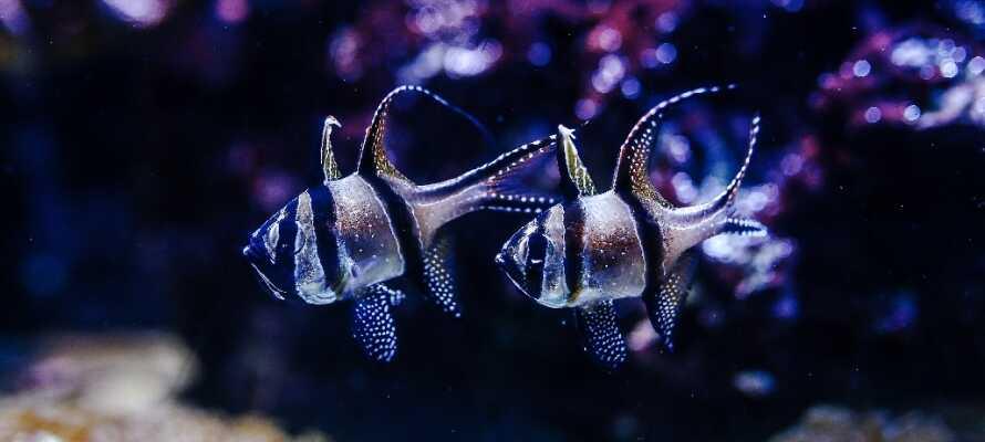Tag en tur i AquaDom som er et kæmpe akvarium med 35 tanke fyldt med hajer, blæksprutter og masser af eksotiske fisk.