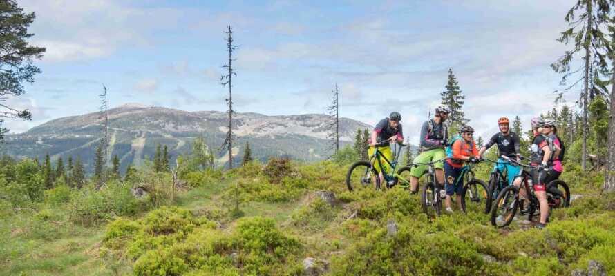 Der er mange naturstier, som er velegnet til en tur på mountainbike, især på den østlige side af Trysilelva.