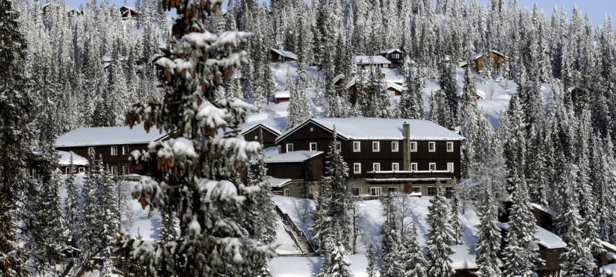 Velkommen til Kvitfjell Hotel - et sandt skiparadis om vinteren.