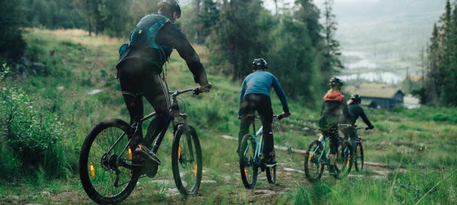 Tag hele familien med på aktiv ferie med herlige vandaktiviteter og unikke vandre- og cykelture.