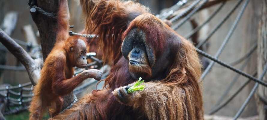 Besøg byens store og moderne zoologiske have. Mange af dyrene kan man komme helt tæt på.
