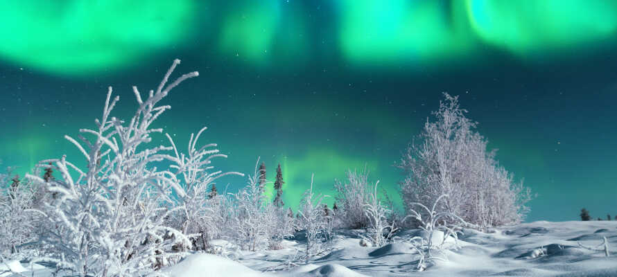 Hvis I er meget heldige, kan I se nordlys.