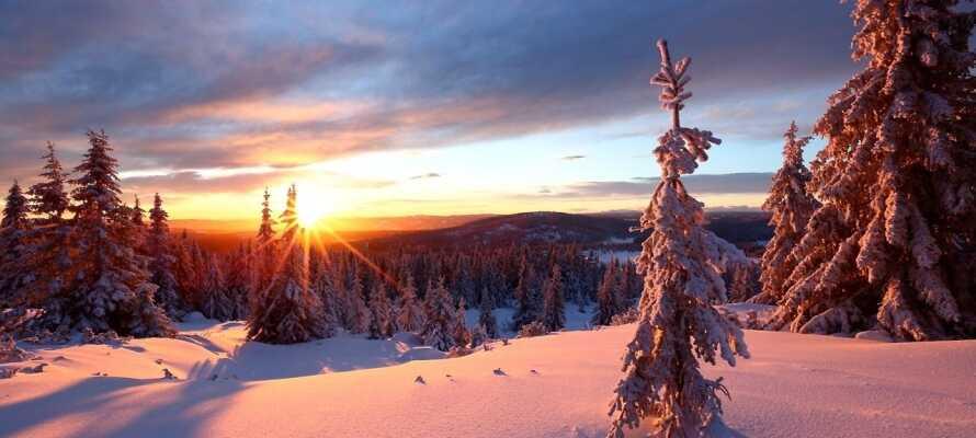 Tag på tur med snesko eller ski i det smukke vinterlandskab omkring hotellet.