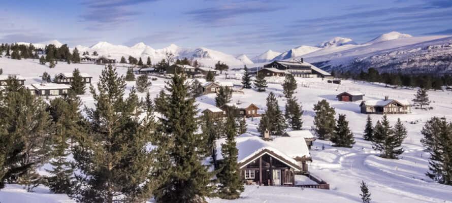 Rondane Nationalpark om vinteren