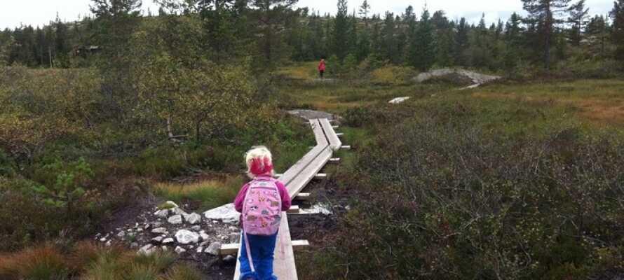 Der er ikke langt til Blefjell med flotte turmuligheder både sommer og vinter.