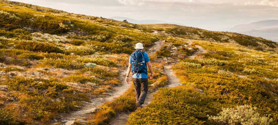 Her finner dere massevis av aktiviteter året rundt. Oppdag naturen gjennom å gå tur eller låne sykler på hotellet.