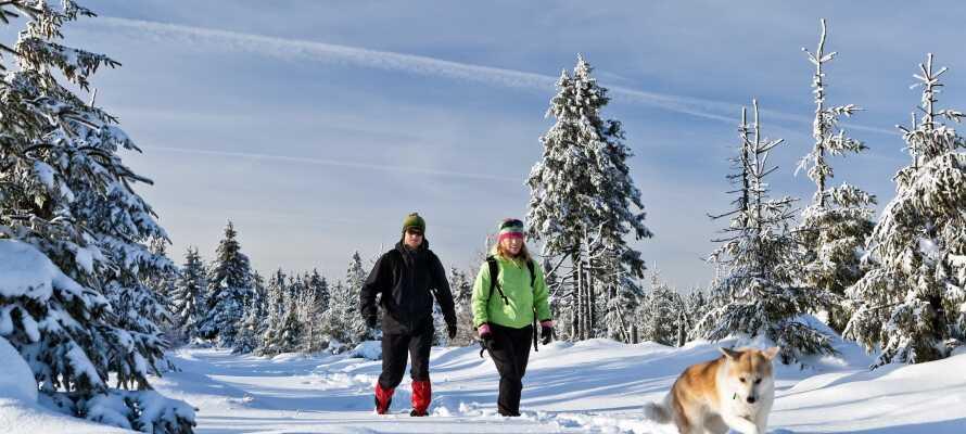 Området egner sig både til hiking og langrendski med flotte ruter i naturen for hele familien.