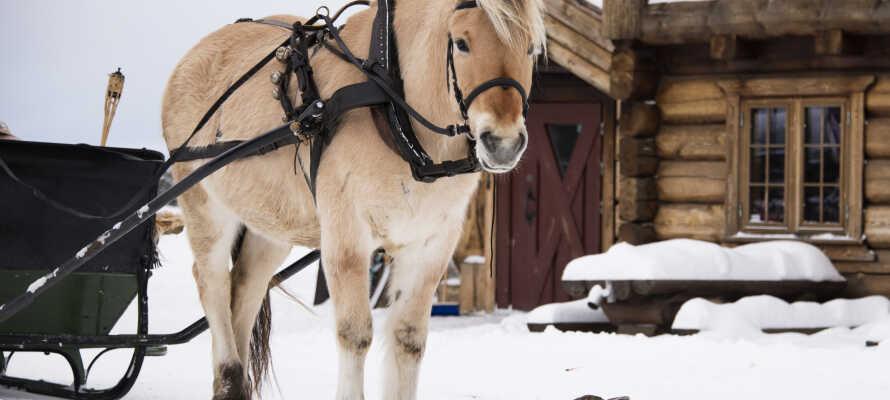 Tag på gårdhop ved 'Gardmillom', og besøg nogle af de mange traditionelle gårde i Gudbrandsdalen.