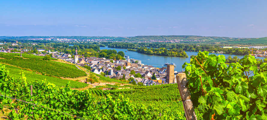 Hotellet ligger omgivet af smukke vingårde og smalle gader, blot en kort slentretur fra Rhinen.