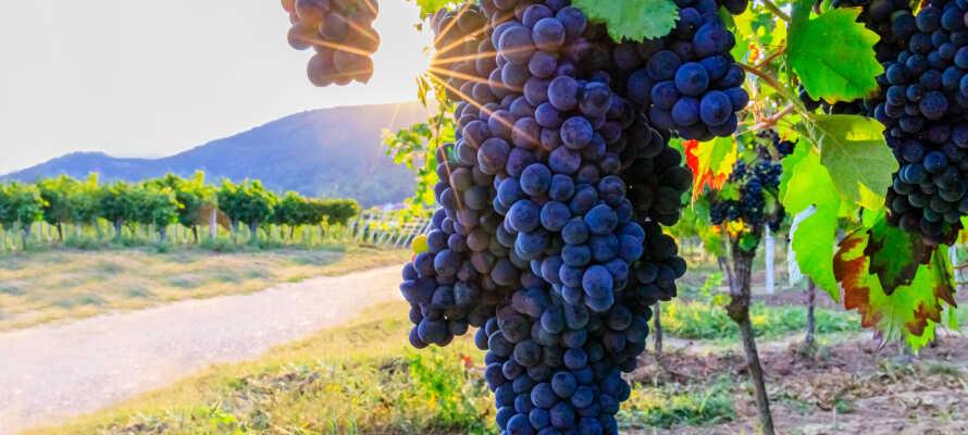Smag vine fra hotellets eget vinotek. Bestil PLUS pakken som inkluderer 4-retters menu med udvalgte vine til.