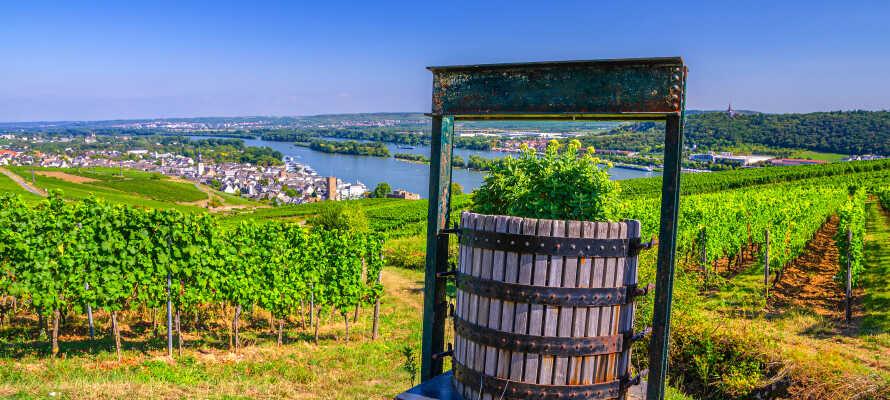 Regionen er kendt for sine udsøgte vine, og mange af områdets vingårde tilbyder smagninger og guidede ture.